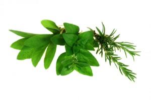 herb-sprig